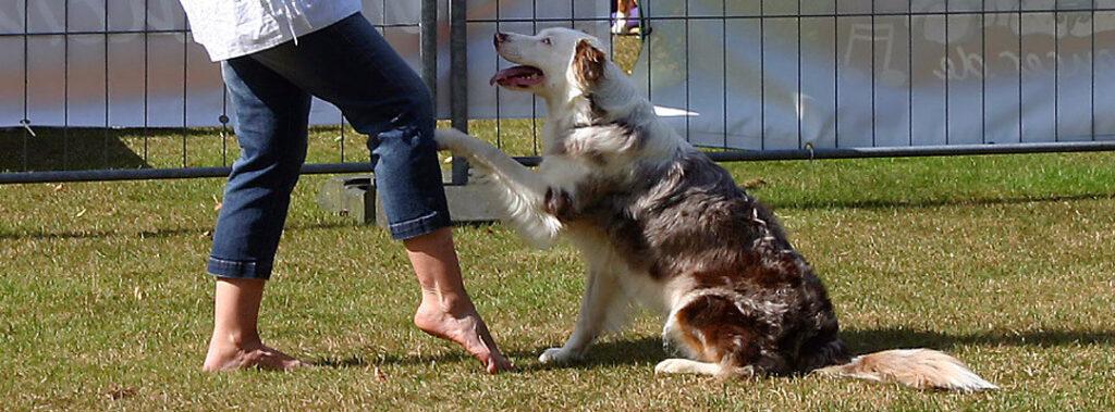 visual-gruppentraining-dogdance